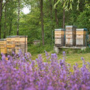Bienenstoecke vomWaschberg