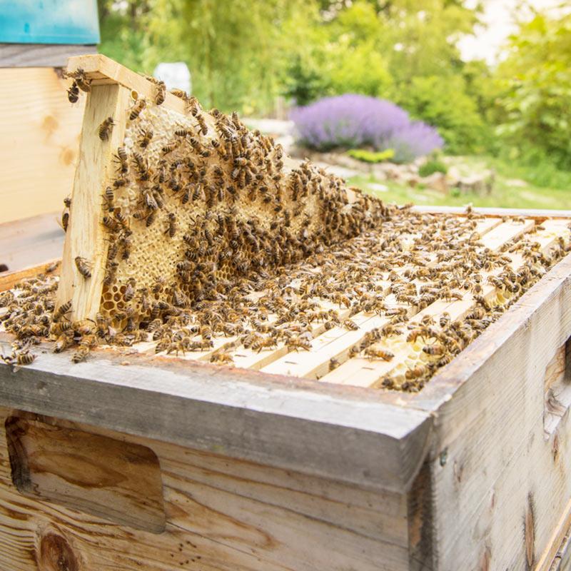 Bienenwaben in Beute